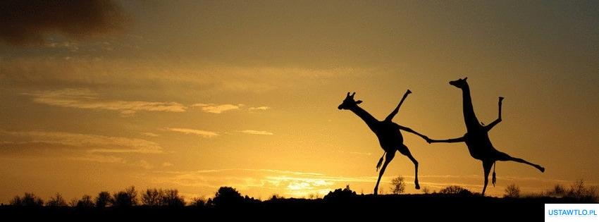 tło Tanie żyraf na facebooka oś czasu
