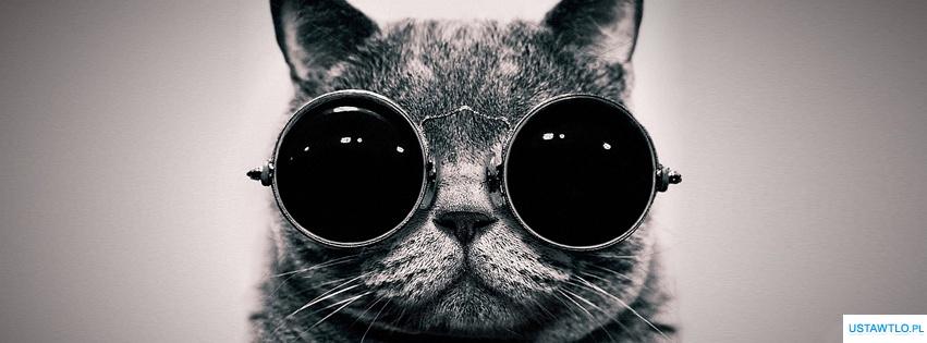 Tło Na Facebooka Kot W Okularach