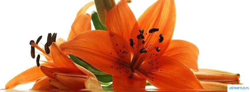 tło Kwiat na facebooka oś czasu