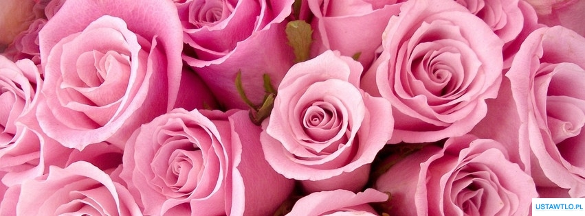 tło tło różowe róże na facebooka oś czasu