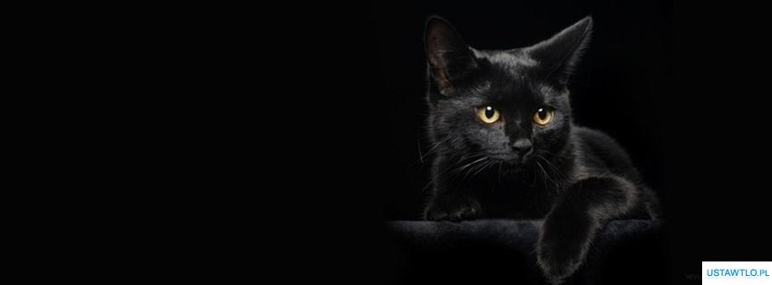 Tło Na Facebooka Tapeta Kot