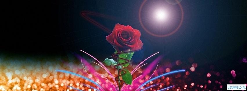 tło Tapeta róża na facebooka oś czasu